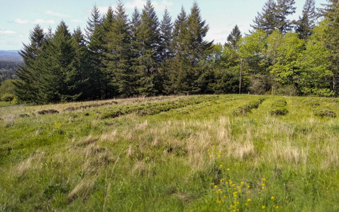 Westwind Lavender Farm