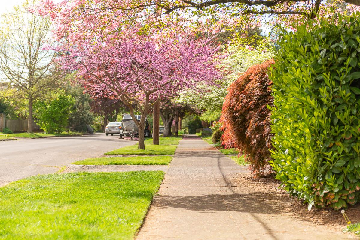 Generic Neighborhood, Winterbrook Planning
